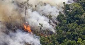 CIDH y su REDESCA expresan profunda preocupación por la deforestación y la quema en la Amazonía