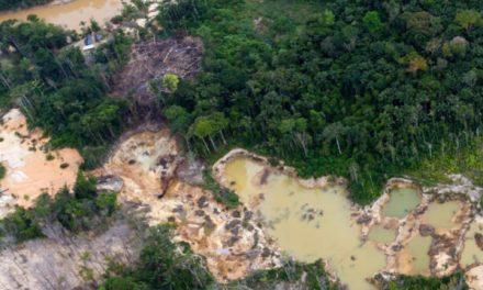 Organización de la Cuenca del Caura Kuyujani  exige el cumplimiento y preservación de los pueblos y comunidades indígenas