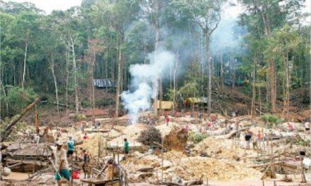 40 ONG rechazan ataque contra líder del pueblo Yabarana de Amazonas, haciendo exigencias a las autoridades